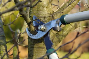 eugene-pruning-service
