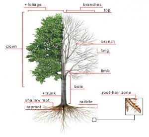 eugene-tree-service