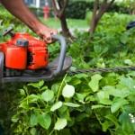 eugene-oregon-hedge-triming