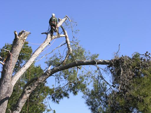 Tree Removal Eugene Tree Removal | Superior Tree Service